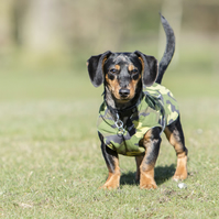 Chest protector dog coat -x small bespoke item colour of your choice