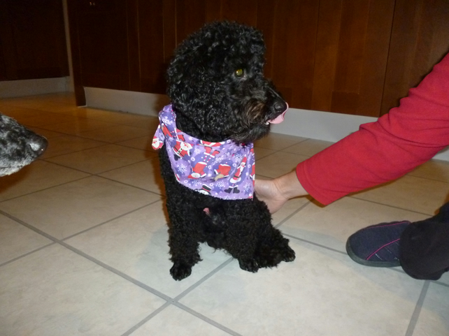 Christmas dog bandana large - purple festive