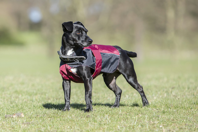 Chest protector dog coat - Small Green and Burgundy
