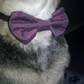 Bow tie for dogs. medium