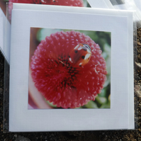 Photo card. Made with an original photo. Ladybird on pink