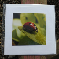 Photo card. Made with an original photo. Ladybird on green.