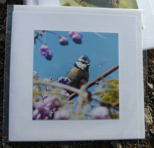 Photo card. Made with an original photo. Blue tit in a wisteria tree.
