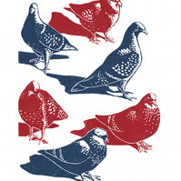 Pigeons A3 poster-print