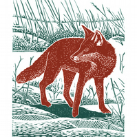 Fox In The Snow A3  poster-print