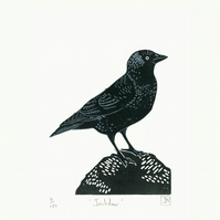 Jackdaw two-colour linocut print