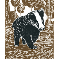 Young Badger A3 poster-print