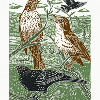 Blackbirds and Thrushes poster-print