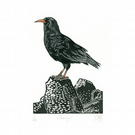 Chough three-colour linocut print