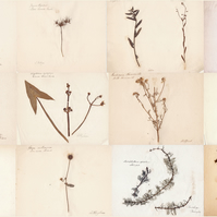 Herbarium Collection 1870 Superb Detailed Photographic Print A3