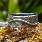Granite River - Sterling Silver and Gold Ring