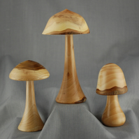Toadstools for Collectors