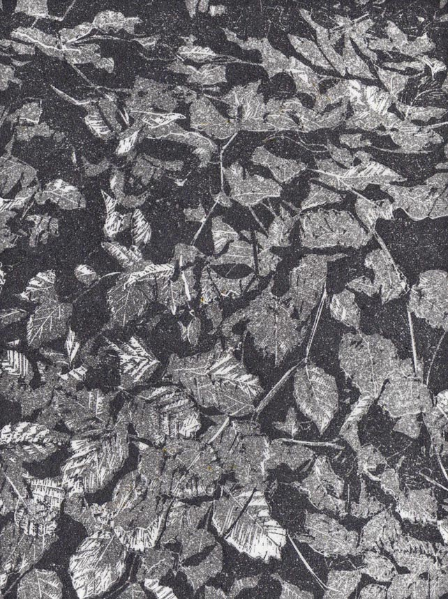 Silver Beech - hand burnished woodcut print limited edition