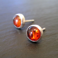 Amber Stud Earrings - Amber Studs, Amber Jewellery