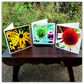 Summer's end.  Set of three blank cards, each with an original photograph.