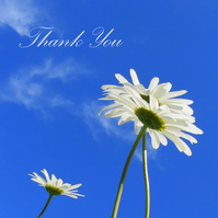 Daisy, daisy.  A thank you card featuring an original photograph.