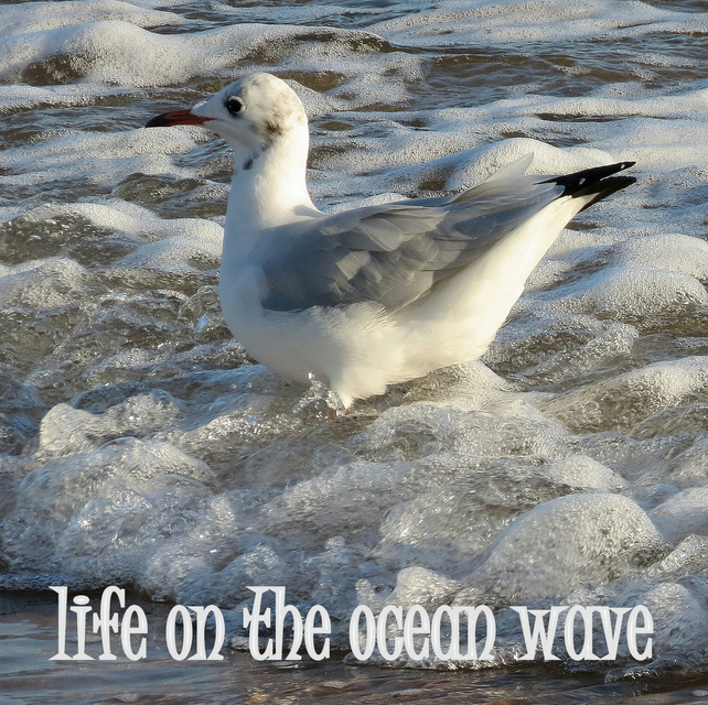 Life on the ocean wave.  A card featuring an original photograph.
