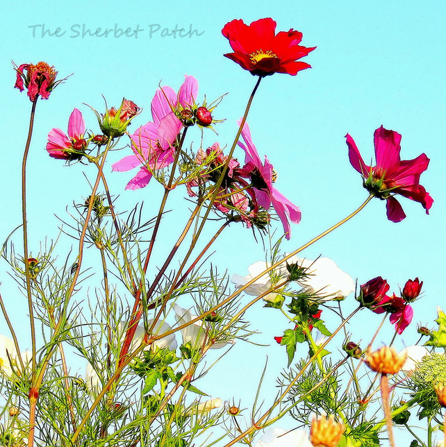 Summer meadow.  A card featuring an original photograph.  Blank inside.