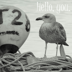 ''Hello, you.''  A card featuring an original photograph.