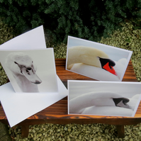 The snoozy swan. A set of three cards featuring original photographs.