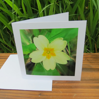 Primrose yellow.  A card featuring an original photograph.  Left blank inside.