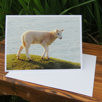 Sea Sheep.  A card featuring an original photograph.  Blank inside.