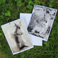 Eye Spy.  A set of two cards, each featuring an original photograph.  Squirrels.