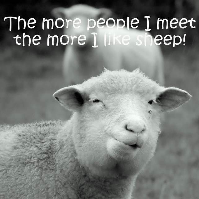 The more people I meet the more i like sheep.  Blank inside.  Sheep Card.