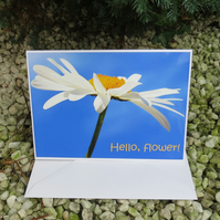 Hello, flower!  A card featuring an original photograph.  Blank inside.