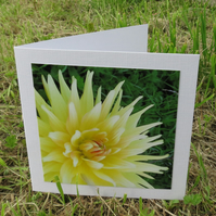 Dahlia.  A card featuring an original photograph.  Blank inside.  Notelets.