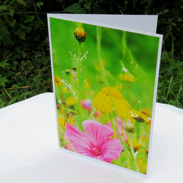 A card featuring an original photograph.  Blank inside.  Wildflower.
