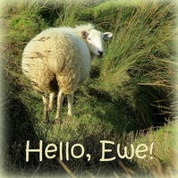 Hello, Ewe!  A card featuring an original photograph.  Blank inside.  Sheep.