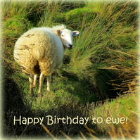 Happy Birthday!  A card featuring an original photograph.  Blank inside.  Sheep.
