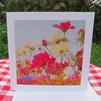 A card featuring an original photograph.  Blank inside.  Summer meadow.