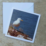 Seagull.  A card featuring an original photograph.  Blank inside.
