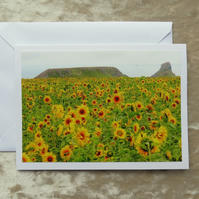 Sunflowers.  A card featuring an original photograph.  Blank inside.