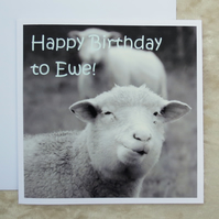 Birthday card.  Sheep card.  A card featuring an original photograph.