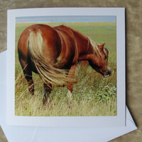Marsh Ponies.  A card featuring an original photograph.  Blank inside.