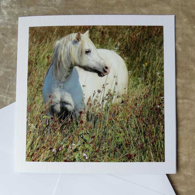 Marsh Ponies. A card featuring an original photograph. Blank inside. Horses.