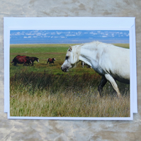 Wild Horses.  A card featuring an original photograph.  Blank inside.