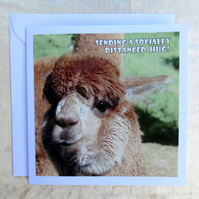 Social distancing card.  Support card.  Alpaca.  Blank inside.