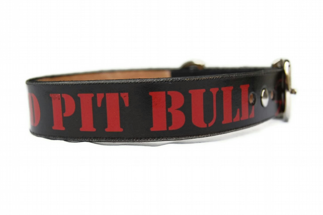 Leather dog collar 2cm wide - I'M BRAD PITTbull