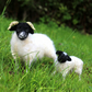 Needle Felted Scottish Blackface Sheep and Lamb