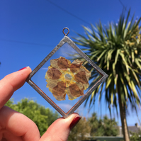 Primula Primrose Stained Glass Panel