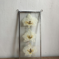 Long triple Orchid Glass Frame