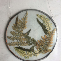Round Fern Arrangement