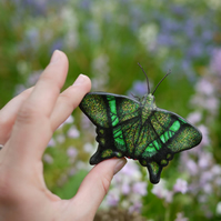 Emerald Swallowtail Butterfly Ornament