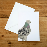 Illustrated Pigeon Card