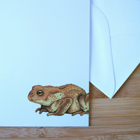 Illustrated Common Toad Card