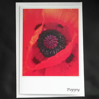 Poppy Greeting Card A6 Size